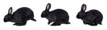 Black Rabbit Hops On A White Background