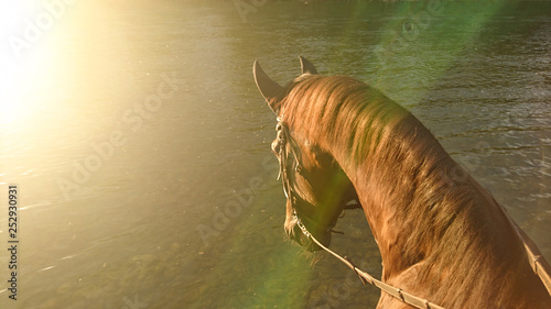 SUN FLARE: Bright sunbeams shine on the horse going towards the river to drink.