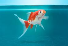 Beautiful Fish In Fishtank, Tu...