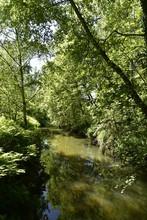 Rivière Aux Eaux Stagnante En Pleine Forêt Du Domaine Provincial De Rivierenhof à Anvers