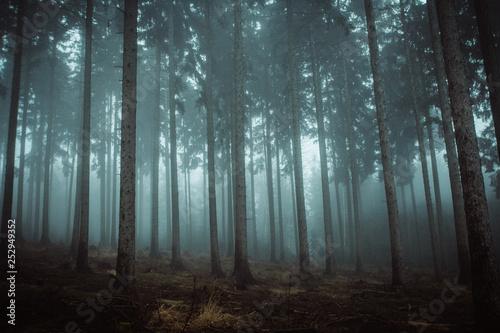 Spoed Foto op Canvas Grijze traf. Nebel im Harz