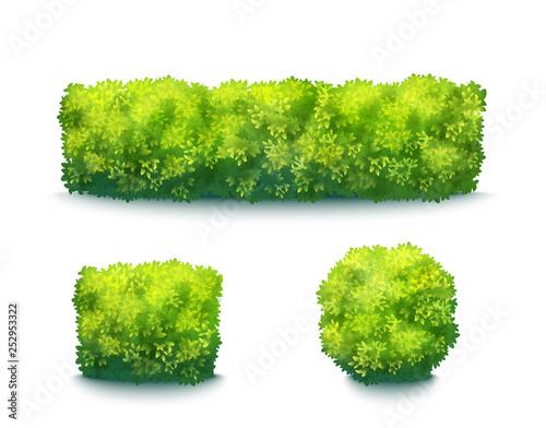Photo Green Garden Hedges