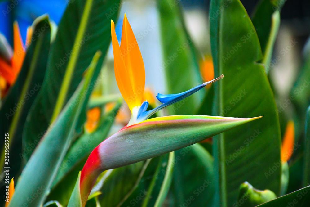 Fototapety, obrazy: Flor de pájaro
