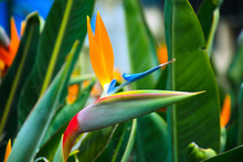 Flor De Pájaro