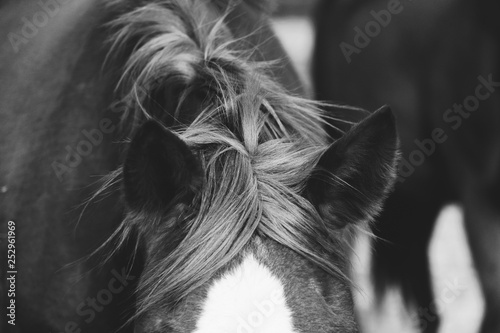 Fotografía  Black and white horse mane close up on windy day.