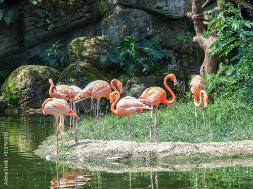 Grupa Flamingi