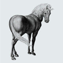 Horse In Vintage Style