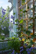 Cute Small Garden On The Balco...