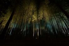 ライトアップされた竹...