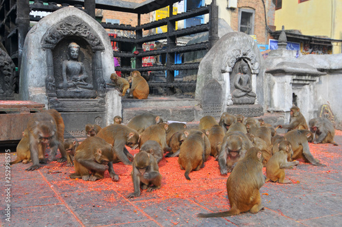 Photo  Nepal, Kathmandu, Swayambhunath stupa, Monkey Temple.