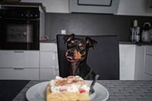 Hund Steht Sitzt Am Tisch Und Starrt Auf Kuchen Auf Teller Mit Gabel Und Leckt Sich Das Maul