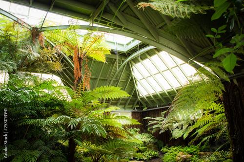 Szklarnia tropikalna szklarni słoneczny wnętrze pełne zielonych roślin. Nowoczesna architektura wnętrz. Naturalny design. Kryte rośliny ozdobne. Ogród Botaniczny.