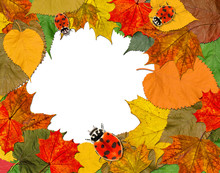 Autumn Marvelous Colorful Leaves Frame And Ladybugs. Nature, Ecology, Wildife And Environmental Protection