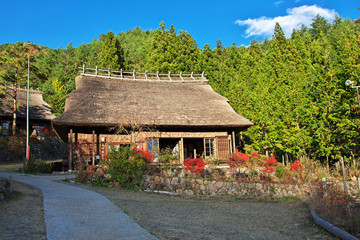 Fototapeta na wymiar Momiji, red maples, Japanese village, Japan