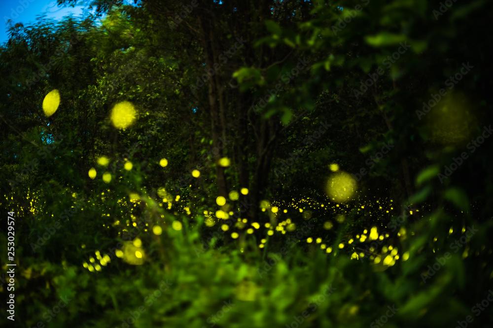 Fototapety, obrazy: Firefly flying in the night forest
