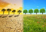 Dry country with cracked soil and meadow with tree. Concept of change climate or global warming.