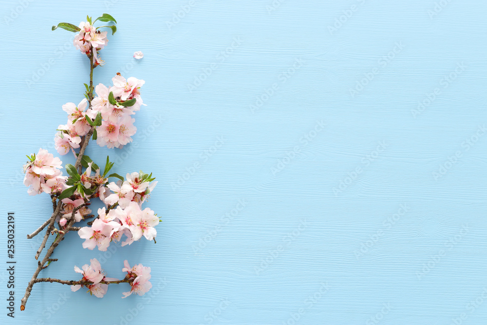 Fototapety, obrazy: photo of spring white cherry blossom tree on pastel blue wooden background. View from above, flat lay