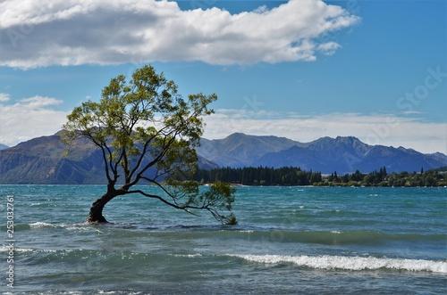 In de dag Bomen wanaka tree blue lake in New Zealand