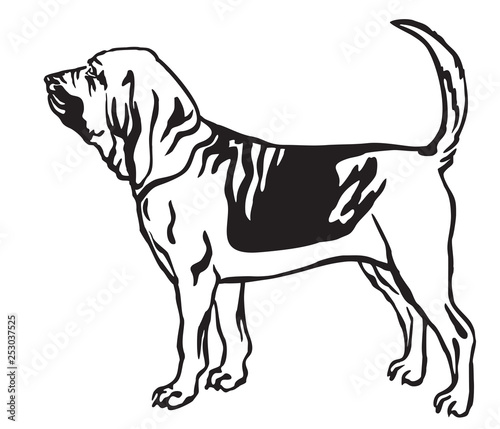 Decorative portrait of Bloodhound Dog vector illustration Fototapet
