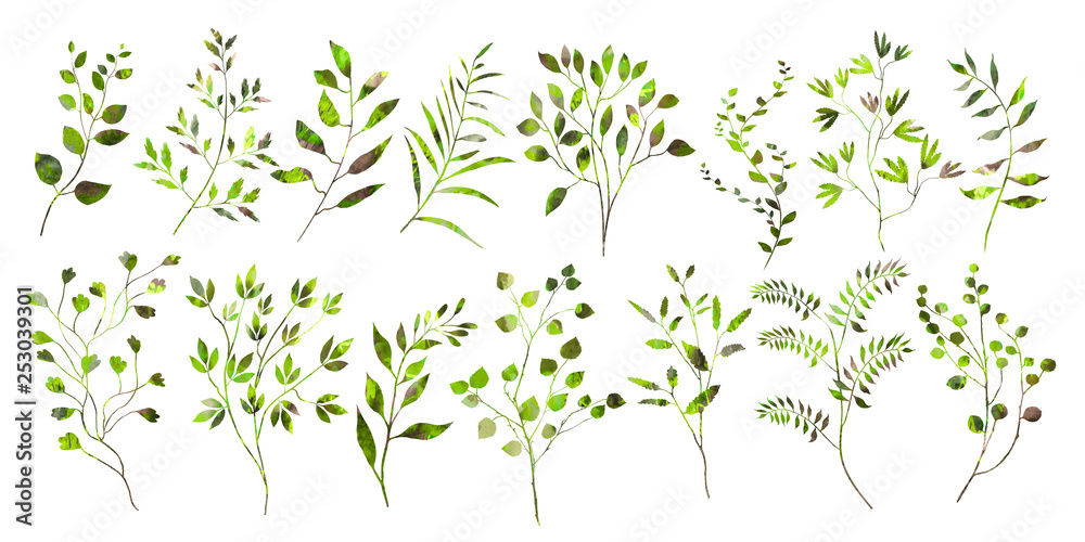 Botanical collection. Herbs, leaves. The original set of elements. Decorative twigs. Watercolor illustration.
