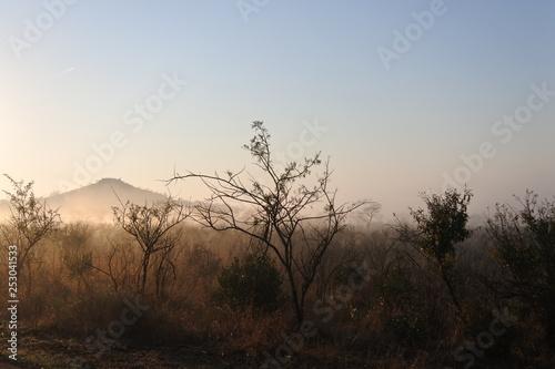 Fotografie, Obraz  Der Tag beginnt im Kruger Nationalpark in Südafrika
