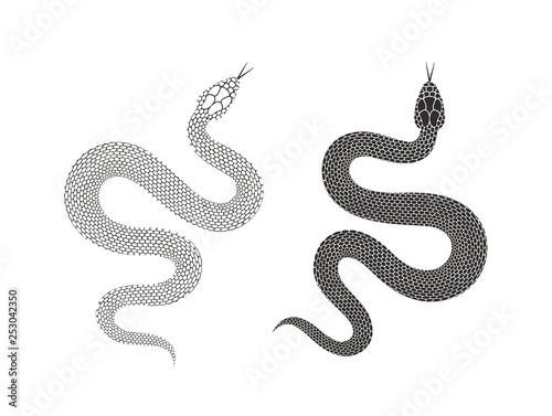 Valokuva Snake logo. Isolated snake on white background