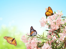 Pink Flowers And Monarch Butterflies