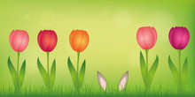 Hare Ears Hide In The Lawn Between Colorful Tulips On Green Spring Background Vector Illustration EPS10