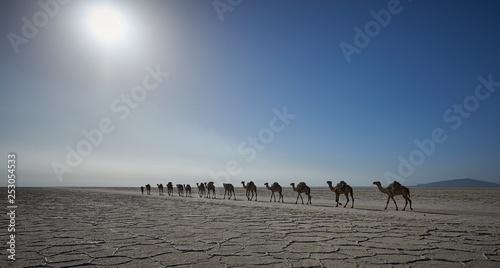 Spoed Foto op Canvas Salt caravan crossing the Afar salt flats