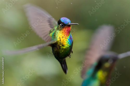 Fotografia Hummingbirds - flying diamonds
