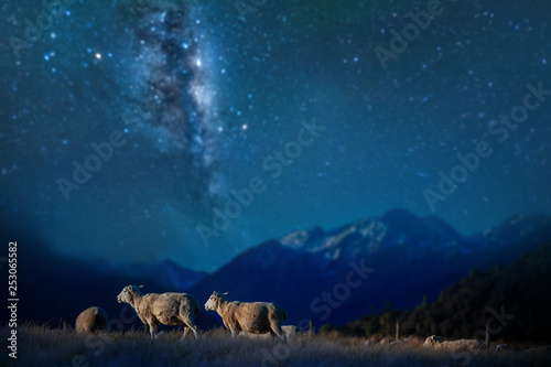 Sheep on the hill on Milky Way Background in New zealand lacations