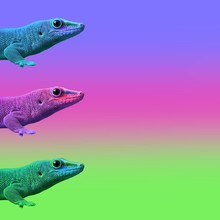 Contemporary Art College,multicolor Exotic Animals Lizards.  Cold Blooded On A Colored Background