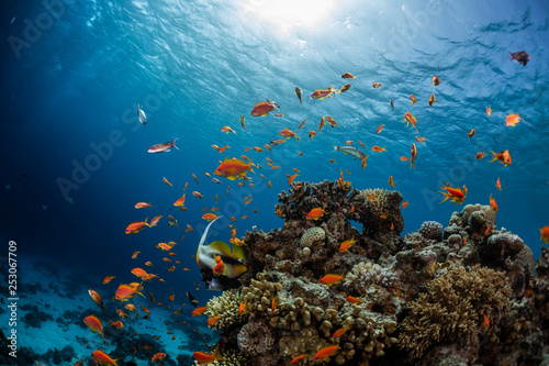 Poster de jardin Recifs coralliens Vivid coral reef full of fishes. Red Sea, Dahab