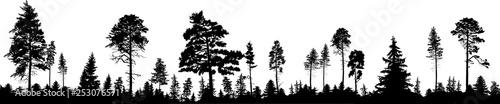 panorama wysokich czarnych drzew las na bielu