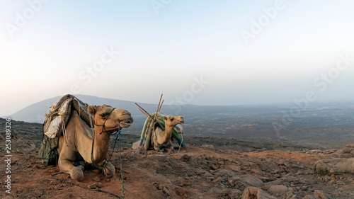 Photographie Camels carry supplies to the overnight camp at the rim of Erte Ale volcano