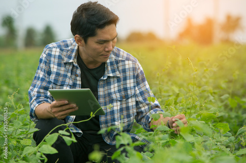 Smart farmers are monitoring crop growth. Wallpaper Mural