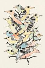 Bunch Of Birds
