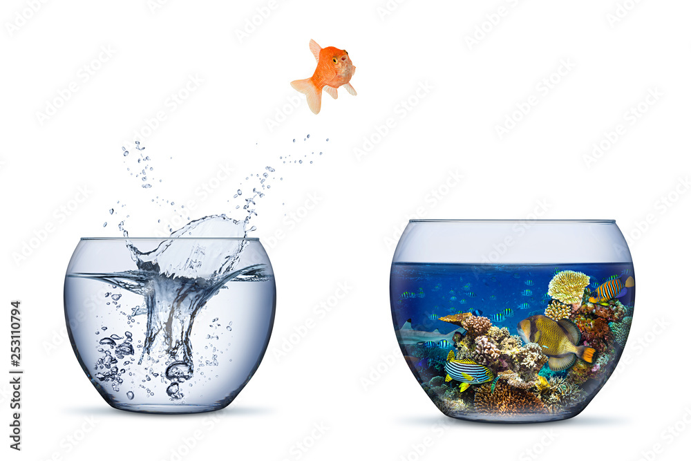 Fototapeta goldfish jump out of bowl into coral reef paradise fish change chance freedom concept isolated background