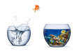Leinwanddruck Bild goldfish jump out of bowl into coral reef paradise fish change chance freedom concept isolated background
