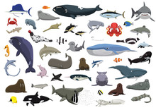 Various Cute Sea Animals Carto...