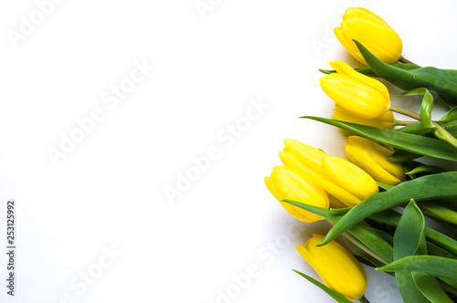 Żółci tulipany na białym tle. Pojęcie wiosny lub dnia kobiet