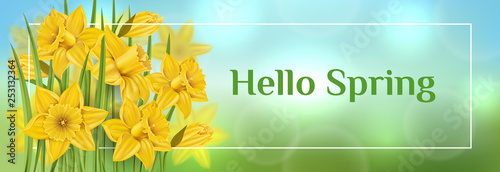 Fotografía Horizontal spring banner with yellow daffodil flower and green leaf in grass