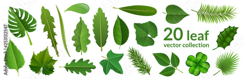 Foto Green leaf collection including 20 type of different leaf design, tropical, flower and fruit leaves