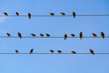 A Flock Of Blackbirds Sitting On Wires Similar To Musical Notes Against A Blue Cloudless Sky