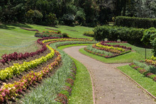 Alley In Royal Botanical Garden, Peradeniya, Sri Lanka.