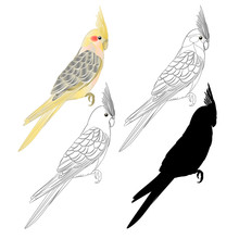 Yellow Cockatiel Cute Tropical Bird Funny  Parrot Watercolor Style Outline And Silhouette On A White Background Vintage Vector Illustration Editable Hand Draw