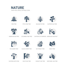 Simple Set Of Icons Such As Northern  Oak Tree, Scarlet Oak Tree, White Oak Tree, Eastern White Pine Birch Butternut Black Cherry Pin Cherry American Chestnut Eastern Cottonwood Related Nature Icons