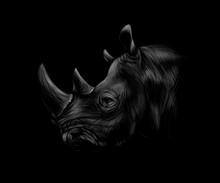 Portrait Of A Rhinoceros Head On A Black Background.