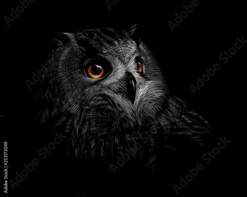 Papiers peints Croquis dessinés à la main des animaux Portrait of a long-eared owl on a black background