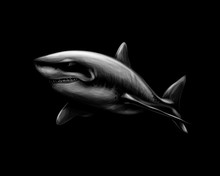 Great White Shark On A Black B...